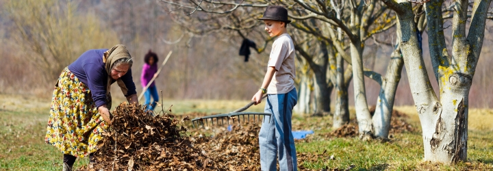 Grandmother and grandson spring cleaning the walnut orchard with rakes